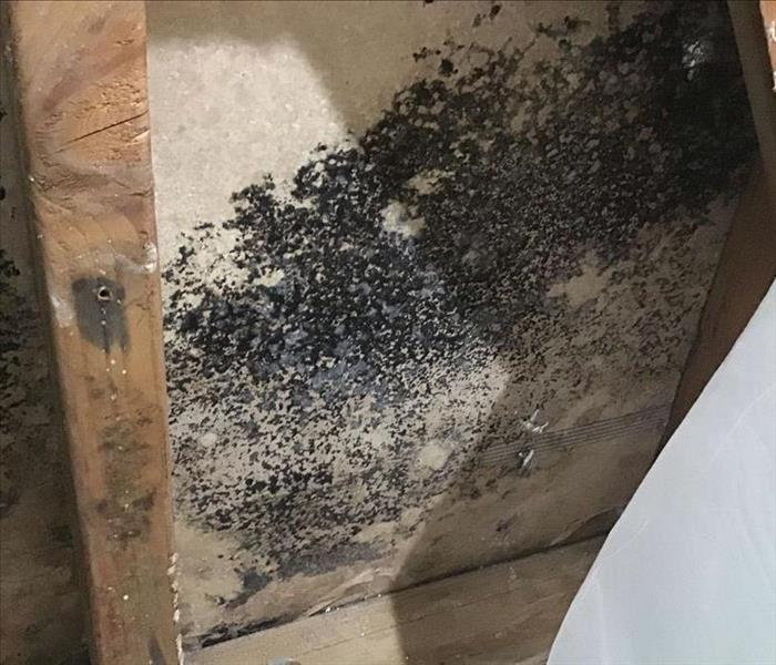 Massive Mold Spread